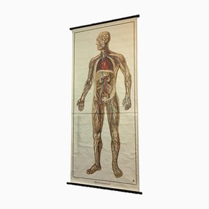 Vintage Anatomical Chart by Dr Te Neues