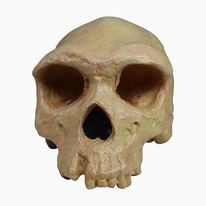 Anatomical Teaching Skull Model from Deutsches Hygiene Museum Dresden, 1960s