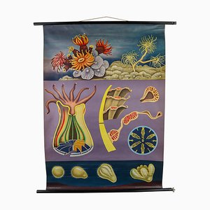 Stony Corals Wall School Chart from Jungkoch Quentell, 1960s