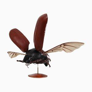 Anatomisches Modell eines Flying Beetle, 1950er