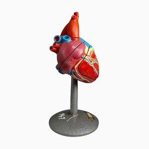 Grand Modèle d'Enseignement Anatomique Heart de Deutsches Hygiene Museum Dresden, 1940s