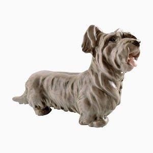 Nummer 2130 Skye Terrier stehend von Bing & Grondahl, 20. Jahrhundert