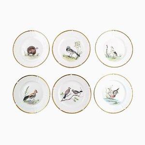 Handbemalte Teller mit Vogelmotiven von Bing & Grondahl, 1930er, 6er Set