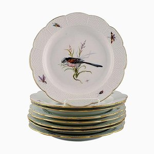 Hand-Painted with Birds and Insects Plates from Meissen, Early 20th Century, Set of 8