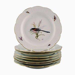 Handbemalt mit Vögeln und Insekten Teller von Meissen, Frühes 20. Jahrhundert, 8er Set