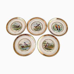 Große Royal Copenhagen Teller für Dinner oder Dekoration mit Vogelmotiv, 5er Set