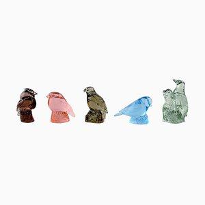 Art Glass Birds Paul Hoff for Svenskt Glas, 1970s, Set of 5