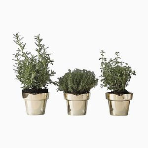 Swedish Herb Pots by Monica Forster for Skultuna, Set of 3