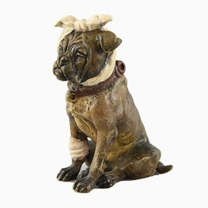 Vienna Bronze English Bulldog with Bandage Sculpture, 1920s