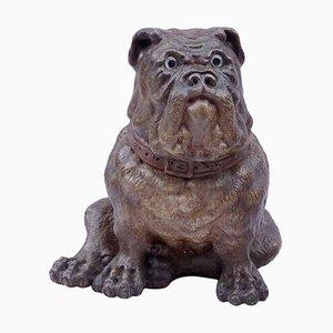 Polychrome englische Bulldogge aus dem 19. Jahrhundert