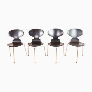 Ant Stühle von Arne Jacobsen für Fritz Hansen, 1968, 4er Set