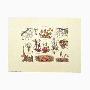 Vintage Mushroom Botanical Poster