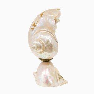 Kleine Vintage Muschel Tischlampe, 1960er