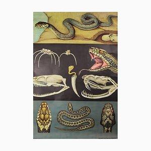 Wandschwarze Schulwandkarte von Jung Koch Quentell, 1970er