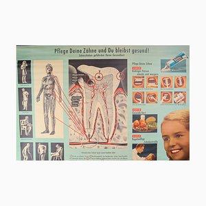 Dentist Wall School Chart, 1970s