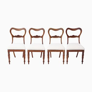 Antike William IV Palisander Esszimmerstühle, 1830er, 4er Set
