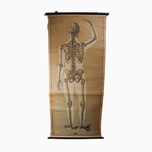 Skeleton School Wall Chart, 1970s