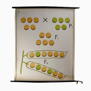 Wall School Chart, 1970s