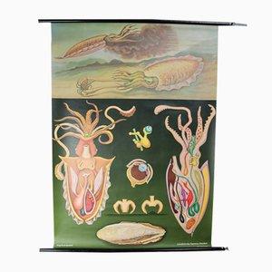 Tableau Scolaire Mural Schweinebandwurm par Jung Koch Quentell, 1970s