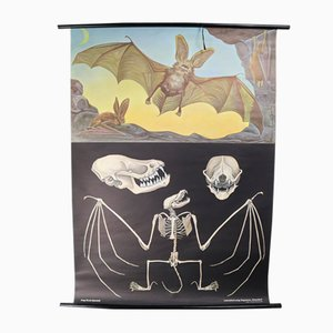 Wandschautafel von Jung Koch Quentell, 1970er