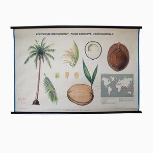 Tschechisches Cocos Nucifera Lehrtafel von Jindŕich Vaselka, 1960er