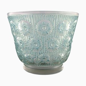 Large Edelweiss Bowl in Turquoise Art Glass by René Lalique, 1937