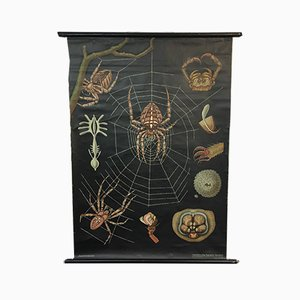 Spider Chart by Jung Koch Quentell, 1950s