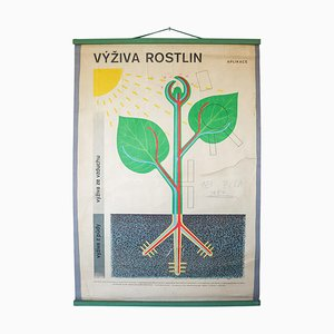 Plant Nutrition Wall Chart, Czech Republic, 1960s