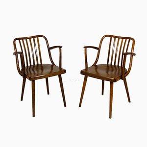 Tschechische Esszimmerstühle aus Holz von Antonin Suman für TON, 1960er, 2er Set