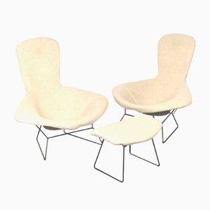 Set di sedie e sgabello Bird di Harry Bertoia per Knoll Inc. / Knoll International, anni '60, set di 3