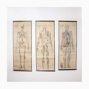 Vintage Czechoslovakian Anatomy Educational Charts, Set of 3