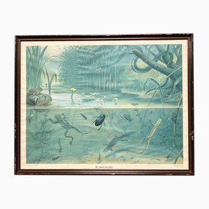 Framed School Print in Pond and Stream, 1950s