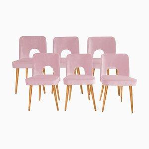 Pinke Shell Esszimmerstühle von Lesniewski für Slupskie Fabryki Mebli, 1960er, 6er Set