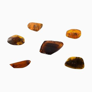 Milk Amber and Darker Amber Brooches in Different Sizes, Set of 6