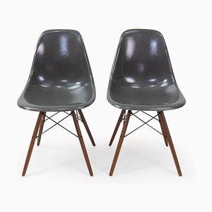 Sedia da pranzo DSW in fibra di vetro grigia di Charles & Ray Eames per Herman Miller, anni '50