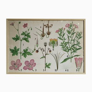 Floral Botanical Illustration on Paper, 1950s