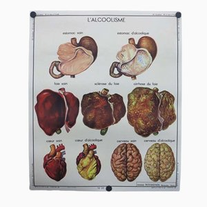 Französisches Doppelseitiges Vintage Lernplakat der Menschlichen Anatomie, 1950er