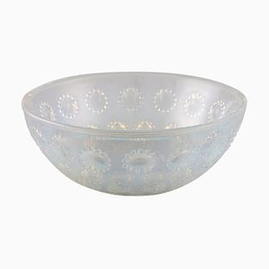 Asters Bowl in Art Glass by René Lalique, 1940s