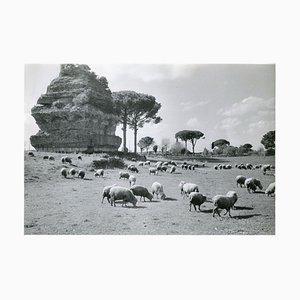 Rome Via Appia, 1954