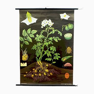 Vintage Potato School Wall Poster by Jung Koch & Quentell for Hagemann