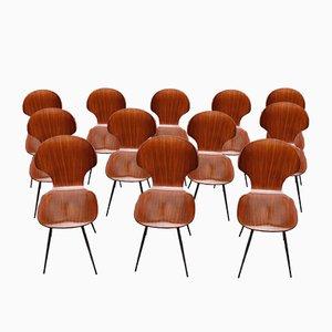 Chaises de Salon en Contreplaqué Courbé et en Fer par Carlo Ratti, 1950s, Set de 12