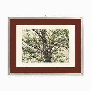 Baum Siebdruck von Giorgio Moiso, 1970er