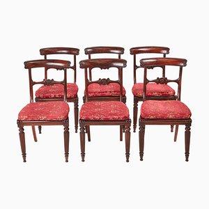 William IV Palisander Esszimmerstühle, 6er Set