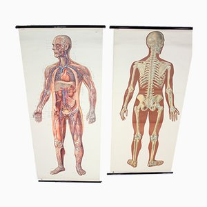Chartes Anatomiques Mid-Century de Deutsches Hygiene Museum, Allemagne, 1950s, Set de 2