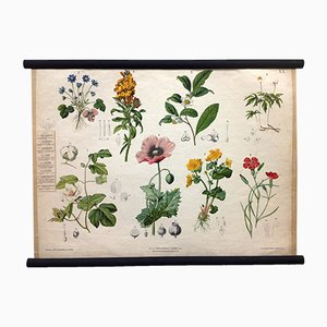Antique Botanical School Poster by Ant. Hartinger und G. v. Beck for Verlag Carl Gerold's Sohn