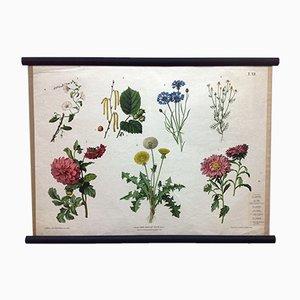 Poster scolastico botanico antico di Ant. Hartinger und G. v. Beck per Verlag Carl Gerold's Sohn, Wien