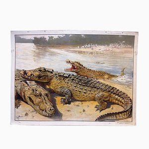 Antique Crocodile Biology School Lithograph Poster by Karl Wagner for C. C. Meinhold & Söhne