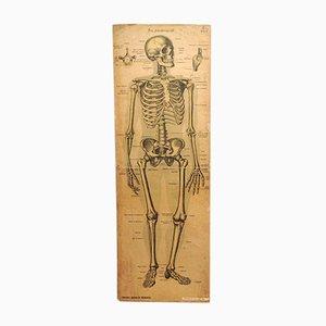 Poster scolastico di medicina antica di Verlag von JF Schreiber a Esslingen und München