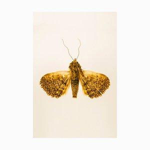 Dead Butterflies Society by Ramtin Zanjani