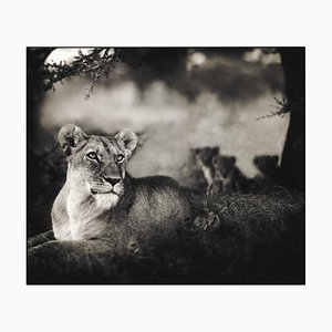Foto de Nick Brandt, Monumental - Leona with Cubs Under Tree, Serengeti